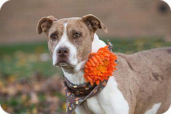 Hound (Unknown Type) Mix Dog for adoption in Flint, Michigan - Hannah