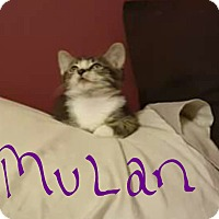 Adopt A Pet :: Mulan - Lighthouse Point, FL