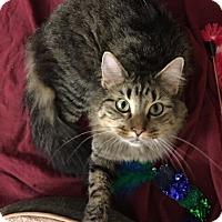 Adopt A Pet :: Theodosia - St. Louis, MO