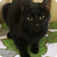 Adopt A Pet :: Ebony - White Cloud, MI