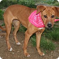 Adopt A Pet :: Emma - Pilot Point, TX