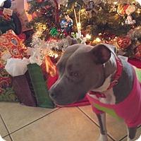 Adopt A Pet :: Sky - Plant City, FL