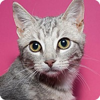 Adopt A Pet :: Crescent - Jersey City, NJ