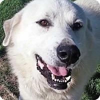 Adopt A Pet :: Grayson in NY - Beacon, NY