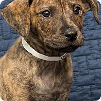 Adopt A Pet :: Baby Cumin - Miami, FL
