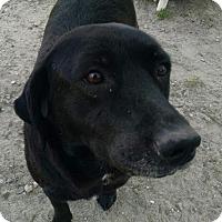 Adopt A Pet :: Josie - Pembroke, GA