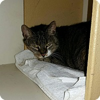 Adopt A Pet :: Noelle - Salem, NH
