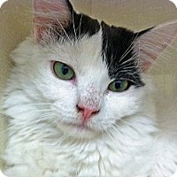 Adopt A Pet :: Puff - Riverhead, NY