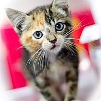 Adopt A Pet :: Shasta - Monroe, GA