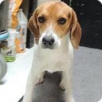 Adopt A Pet :: Nike - Nanuet, NY