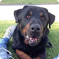 Adopt A Pet :: Dexter - Downey, CA