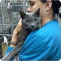 Adopt A Pet :: BeBe - Fort Lauderdale, FL