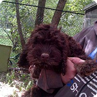Adopt A Pet :: Casey ADOPTION PENDING!! - Antioch, IL