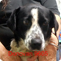 Adopt A Pet :: Donavan - baltimore, MD
