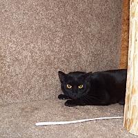Adopt A Pet :: Asia - Benton, PA
