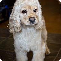 Adopt A Pet :: Chandler - Orange, CA