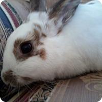Adopt A Pet :: Linus - Watauga, TX