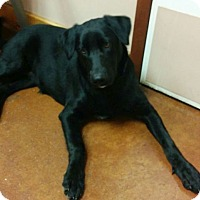 Adopt A Pet :: Leia - Austin, TX