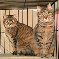 Adopt A Pet :: Teena - Milford, MA
