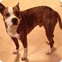 Adopt A Pet :: Grizzley - Cedar Rapids, IA