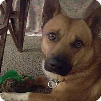 Adopt A Pet :: Oscar - Lomita, CA