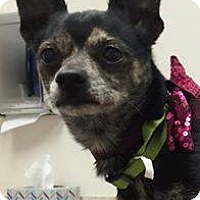 Adopt A Pet :: DJay - Henderson, NV