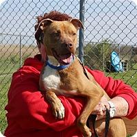 Adopt A Pet :: Miracle - Elyria, OH