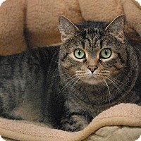 Adopt A Pet :: Twinkles - Winchendon, MA