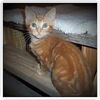 Adopt A Pet :: CHOPPER - Medford, WI