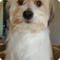 Adopt A Pet :: Benji - Yucaipa, CA