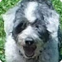Adopt A Pet :: Cowboy - MINNEAPOLIS, KS