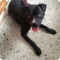 Adopt A Pet :: Joe Louis - Hazel Park, MI