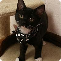 Adopt A Pet :: Tux - Gadsden, AL