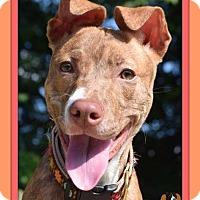 Adopt A Pet :: Gemma - Memphis, TN