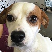 Adopt A Pet :: Jimmy - Joliet, IL