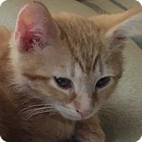Adopt A Pet :: Cagney - Horsham, PA