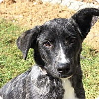 Adopt A Pet :: Aspen - Goodlettsville, TN