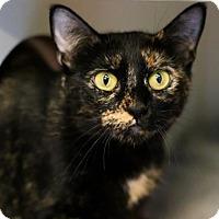 Adopt A Pet :: Raichu - Austin, TX