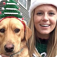 Labrador Retriever Mix Dog for adoption in Memphis, Tennessee - Remy