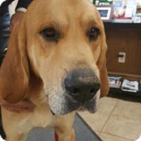 Adopt A Pet :: Trey - Dallas, TX