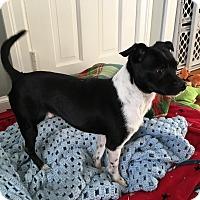 Adopt A Pet :: Chico - Bernardston, MA