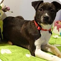 Adopt A Pet :: Brutus - Vacaville, CA