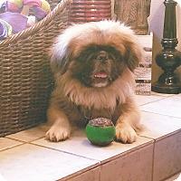 Adopt A Pet :: Chandler - Deltona, FL