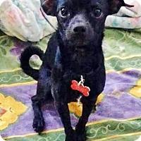 Adopt A Pet :: Phantom - San Diego, CA