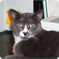 Adopt A Pet :: Dakota - Secaucus, NJ