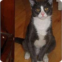 Adopt A Pet :: Jeranamo - Putnam Valley, NY
