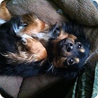 Adopt A Pet :: Nelson - Minneapolis, MN