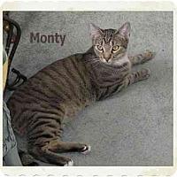 Adopt A Pet :: Monty - Catasauqua, PA