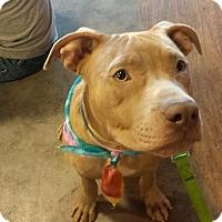 Adopt A Pet :: Kingston - Hollywood, FL