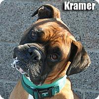 Adopt A Pet :: Kramer - Encino, CA